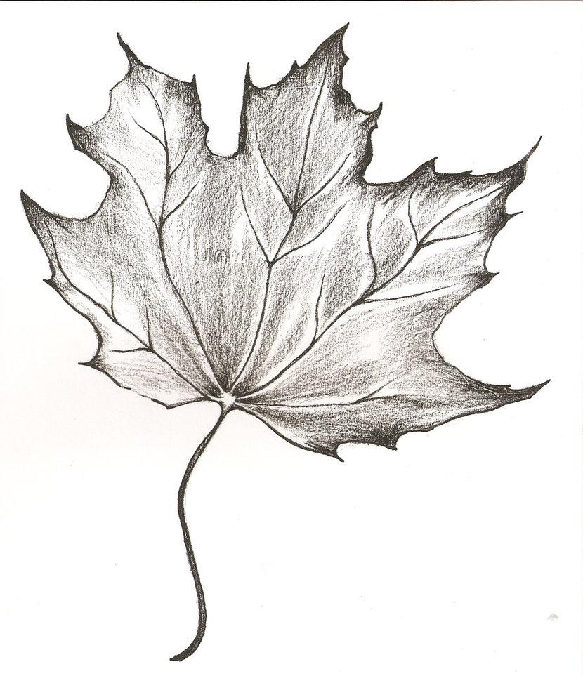 Kresleni Jak Kreslit Listy Stromu Graficke Kresleni