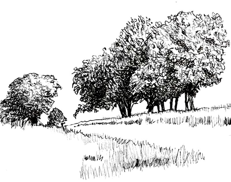 Do Krajiny Patri Stromy Jak Na Ne S Tuzkou Graficke Kresleni