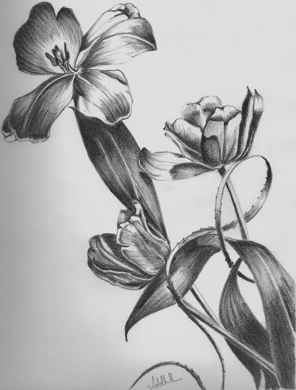 Jak Kreslit Kvetiny 1 Dil Graficke Kresleni