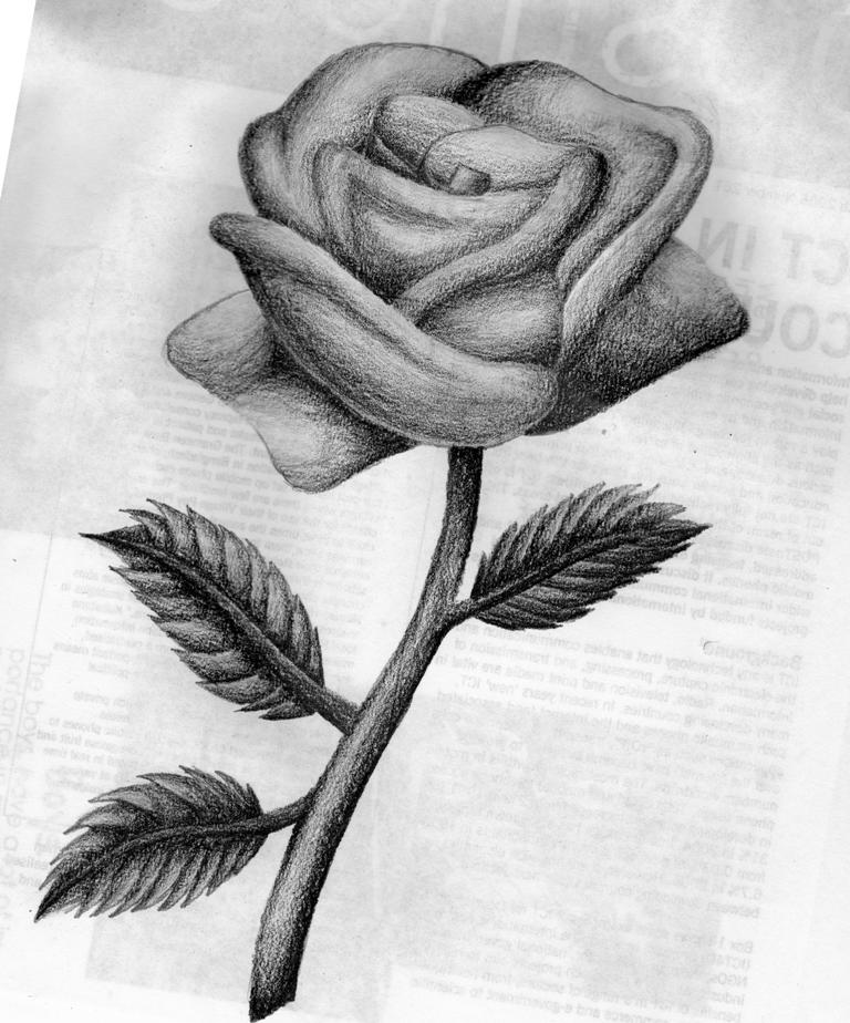 Jak Kreslit Kvetiny 2 Dil Graficke Kresleni
