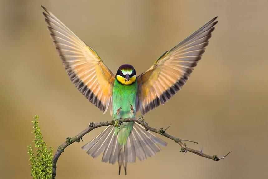 Fotka ptáka