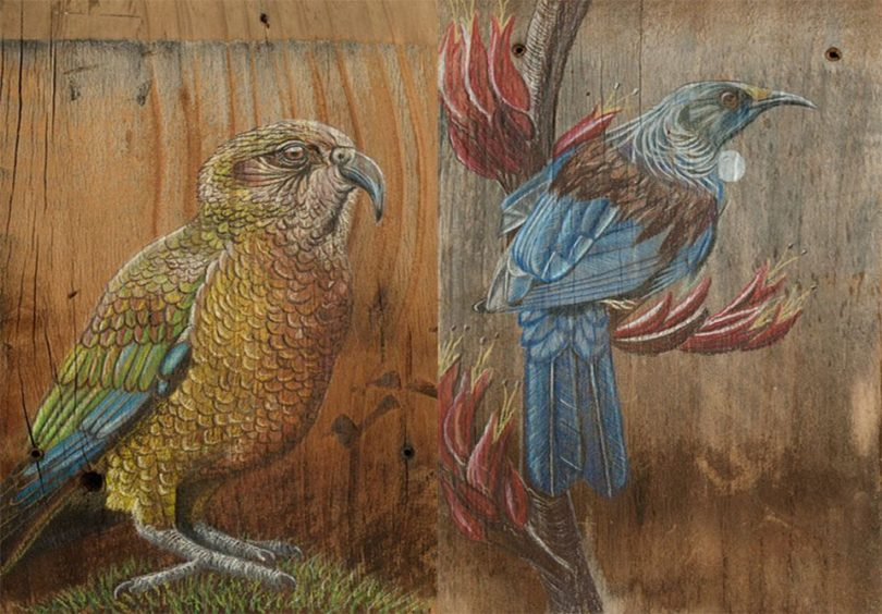 Kresleni Na Drevo Ma Sve Kouzlo Takto Vznikaly Kresby Ptaku Z